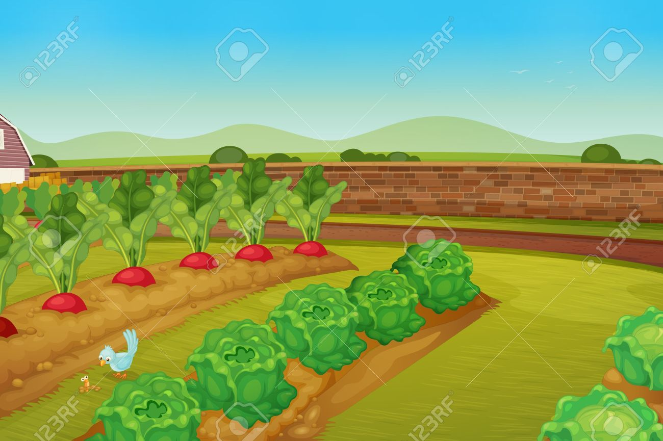 Illustration Of A Vegie Patch Royalty Free Cliparts, Vectors, And ...
