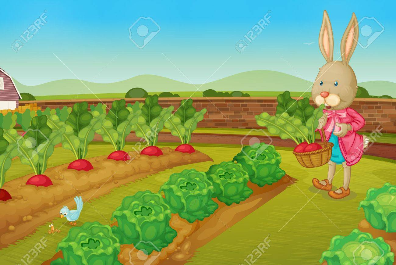 Bunny picking raddishes in the farm - 13424937