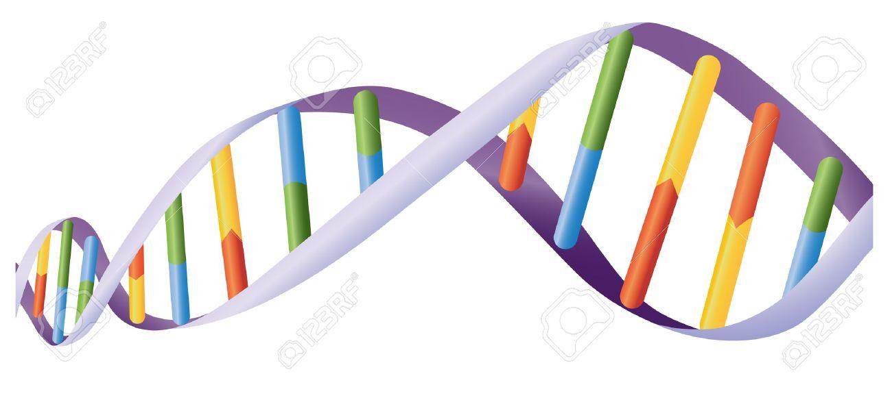 Illustration of DNA helix on white - 13494265
