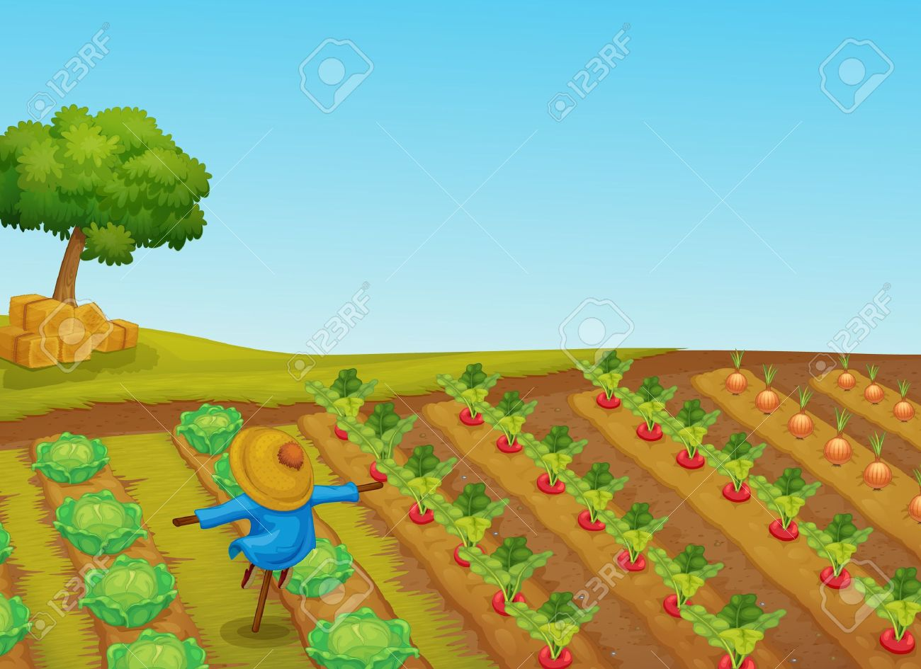 Illustration of a scarecrow in a vegetable patch - 13541934