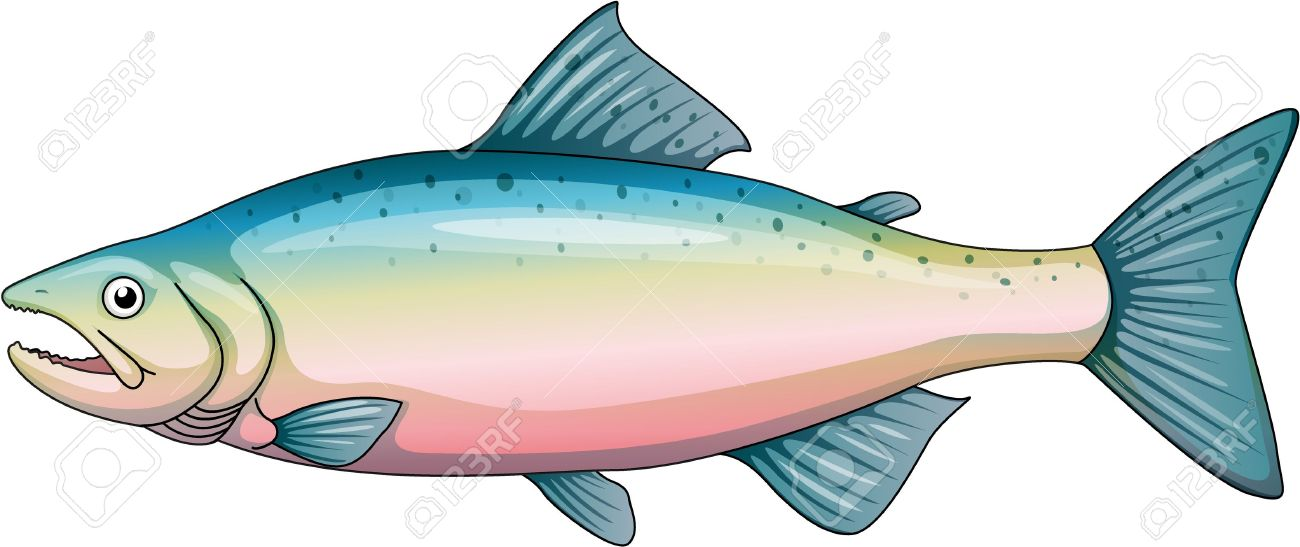 illustration of a rainbow trout royalty free cliparts vectors and rh 123rf com trout clip art free speckled trout clip art