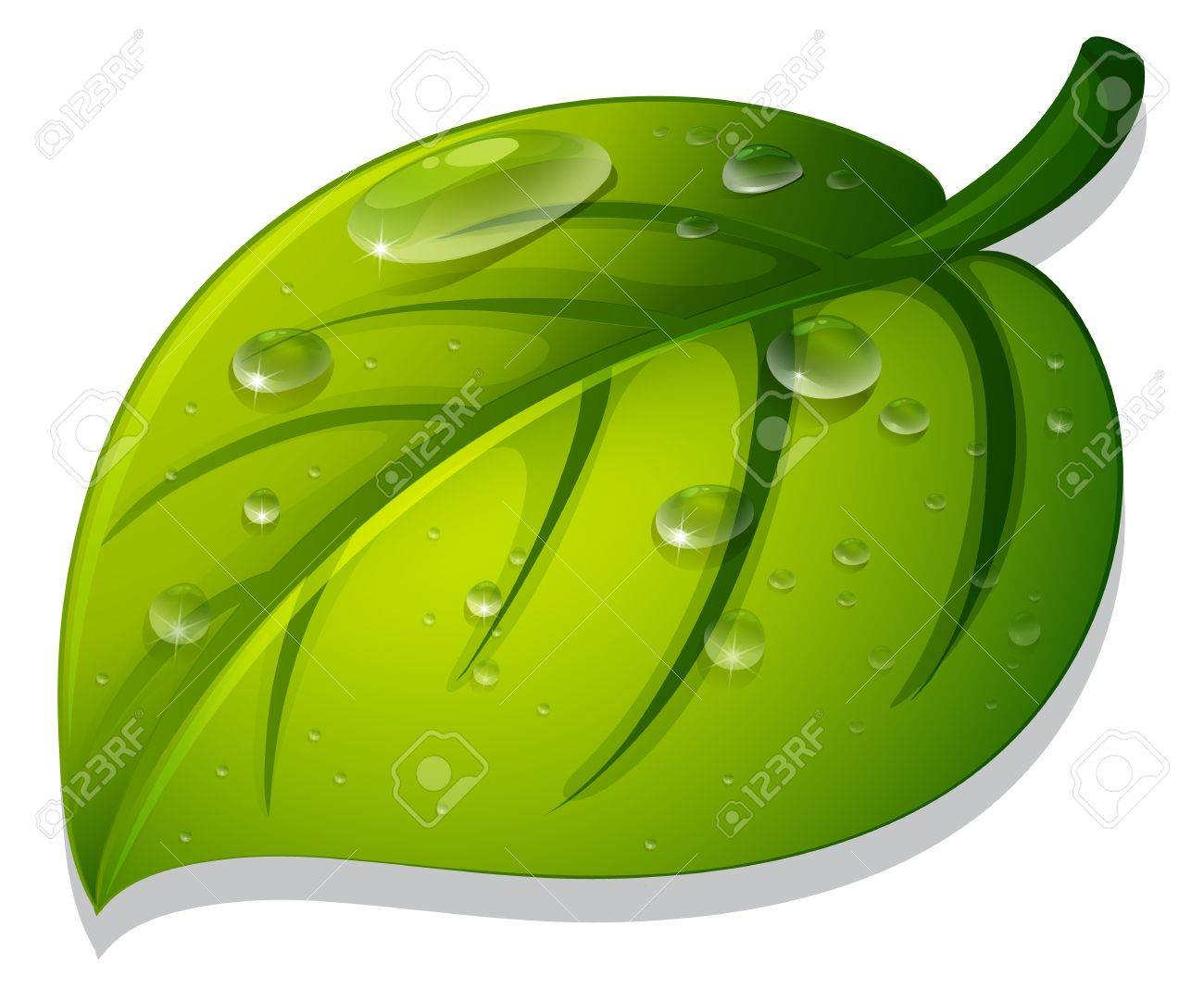 Illlustration of an isolated leaf Stock Vector - 13776676