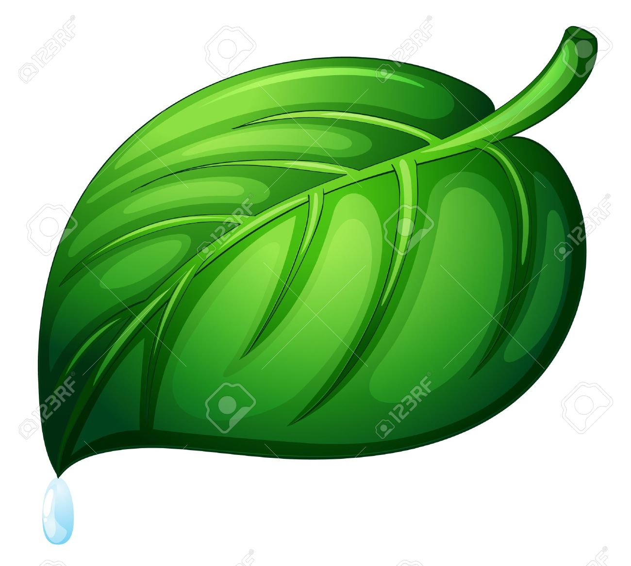 Illustration of a leaf on white Stock Vector - 13800530