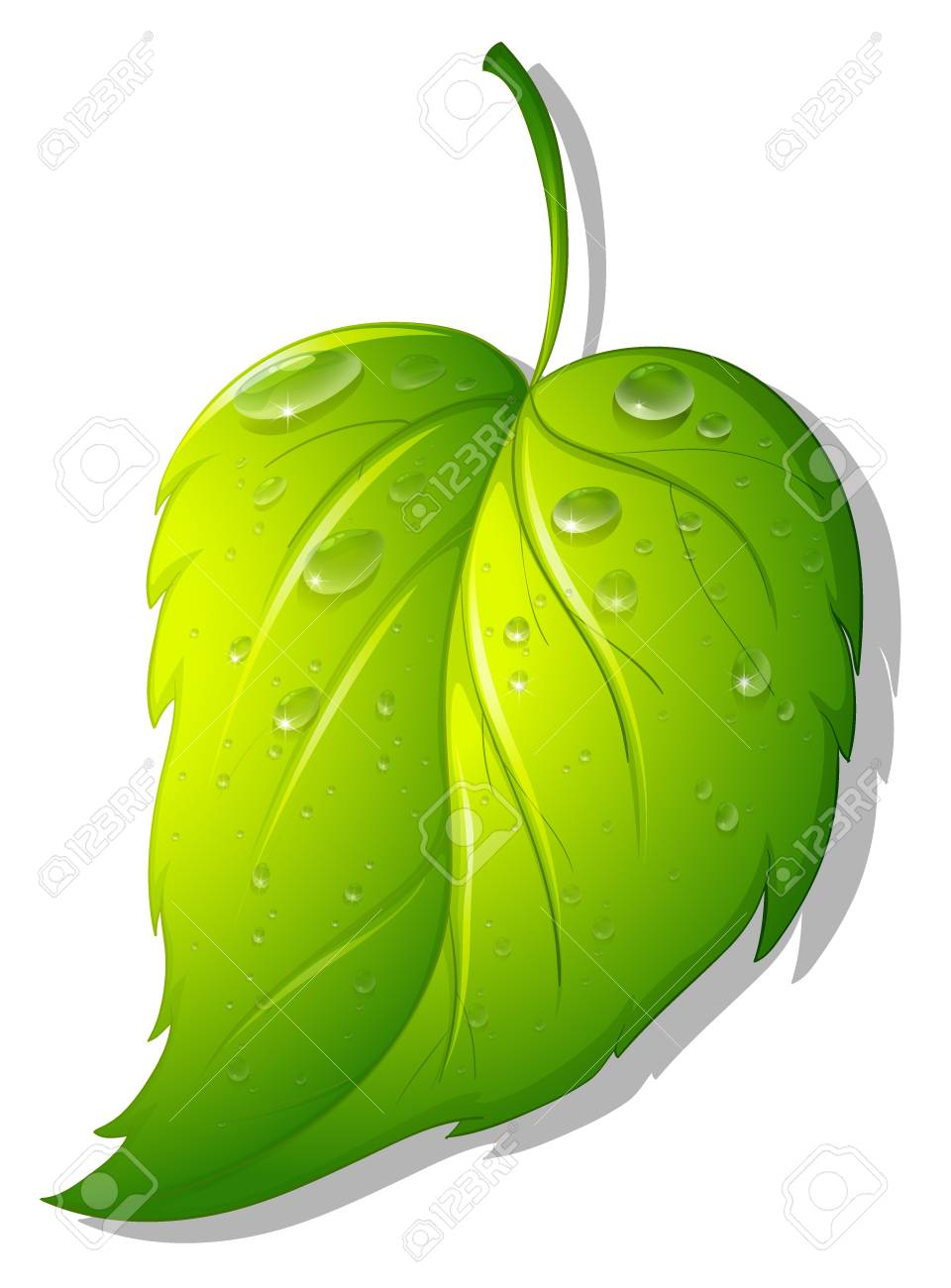 Illustration of a leaf on white Stock Vector - 13800589
