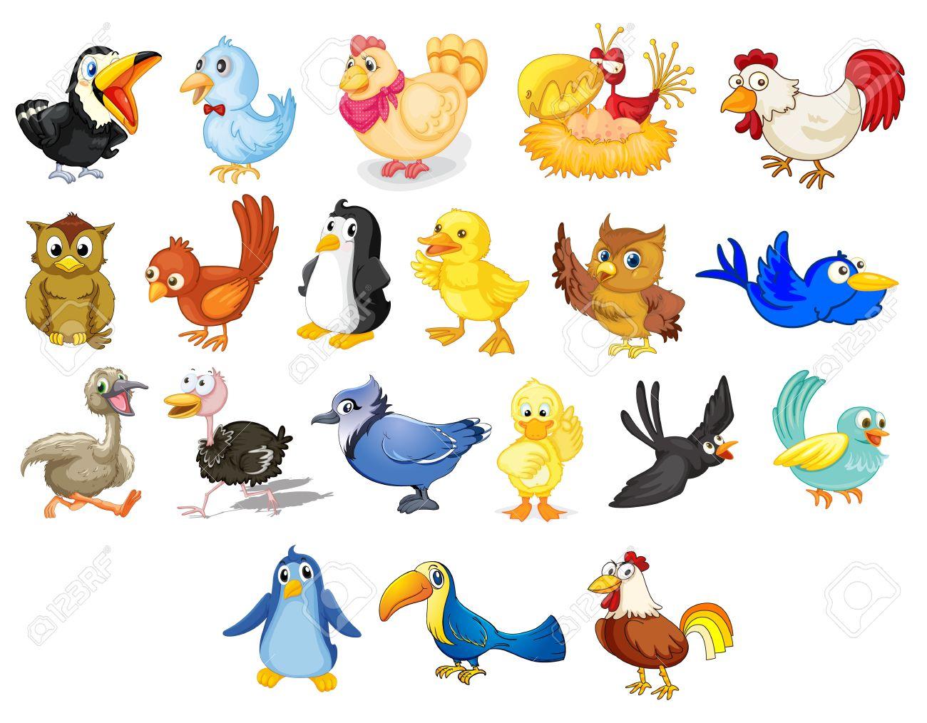 Colección De Pájaros Mixtos Dibujos Animados En Blanco Ilustraciones