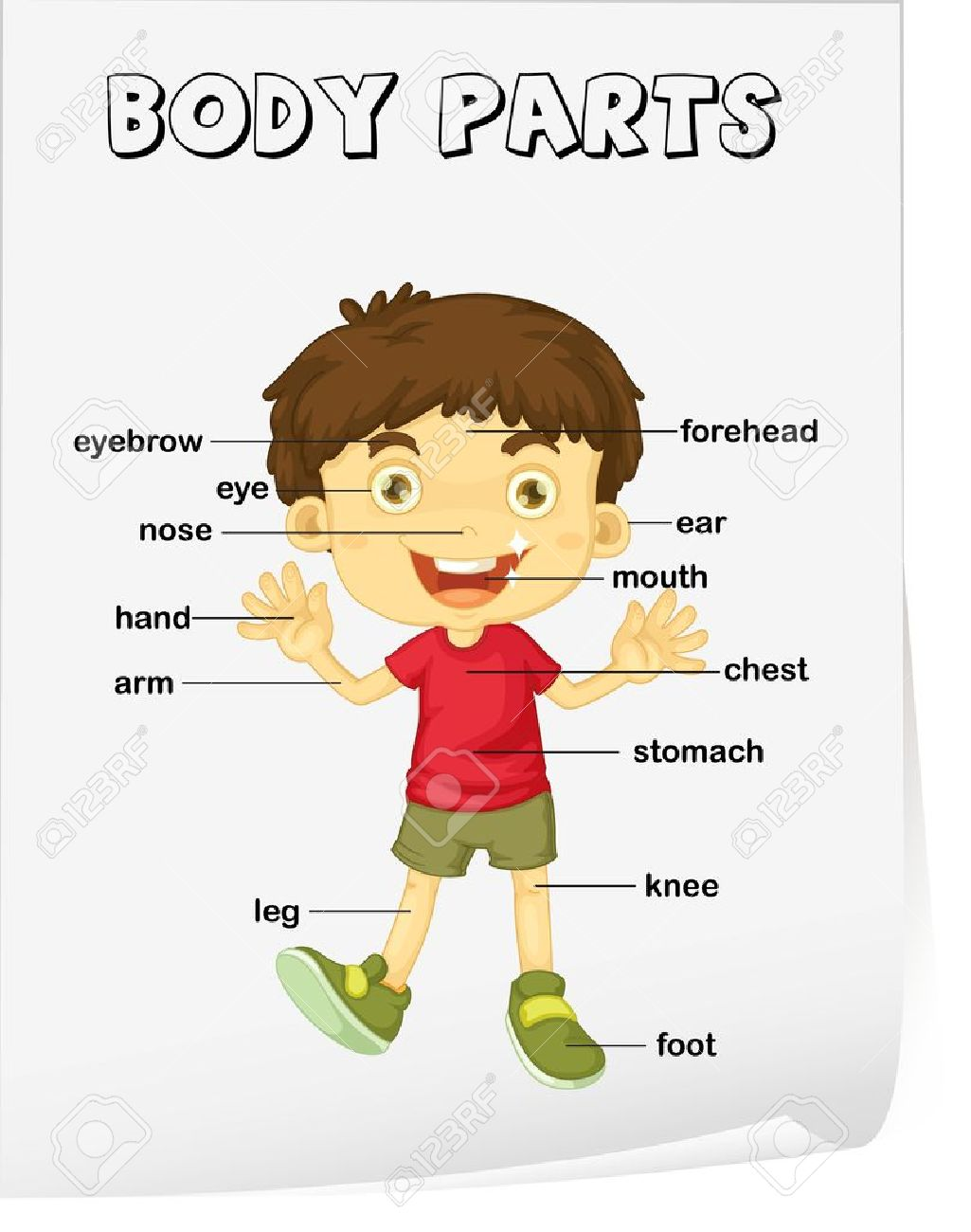 Vocabulary Worksheet Parts Of The Body Royalty Free Cliparts – Parts of the Body Worksheet