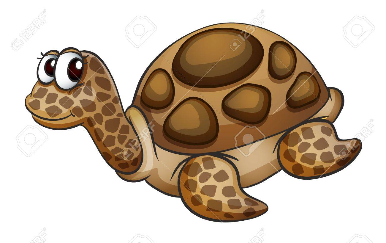 detailed illustration of a tortoise on a white background Stock Vector - 15864279