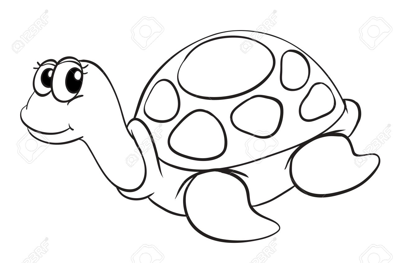 illustration of a tortoise sketch on a white background Stock Vector - 15864393