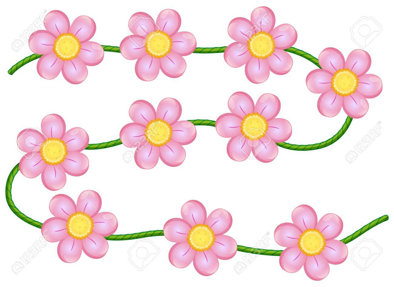 Illustration of vine flowers on a white background