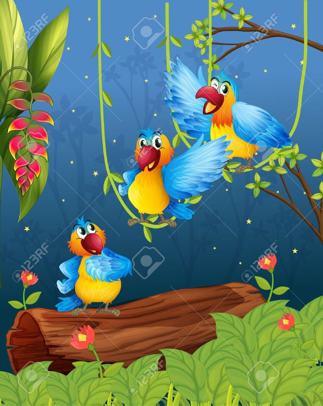 Parrot Cartoon Pictures Colorful Parrots Cartoon