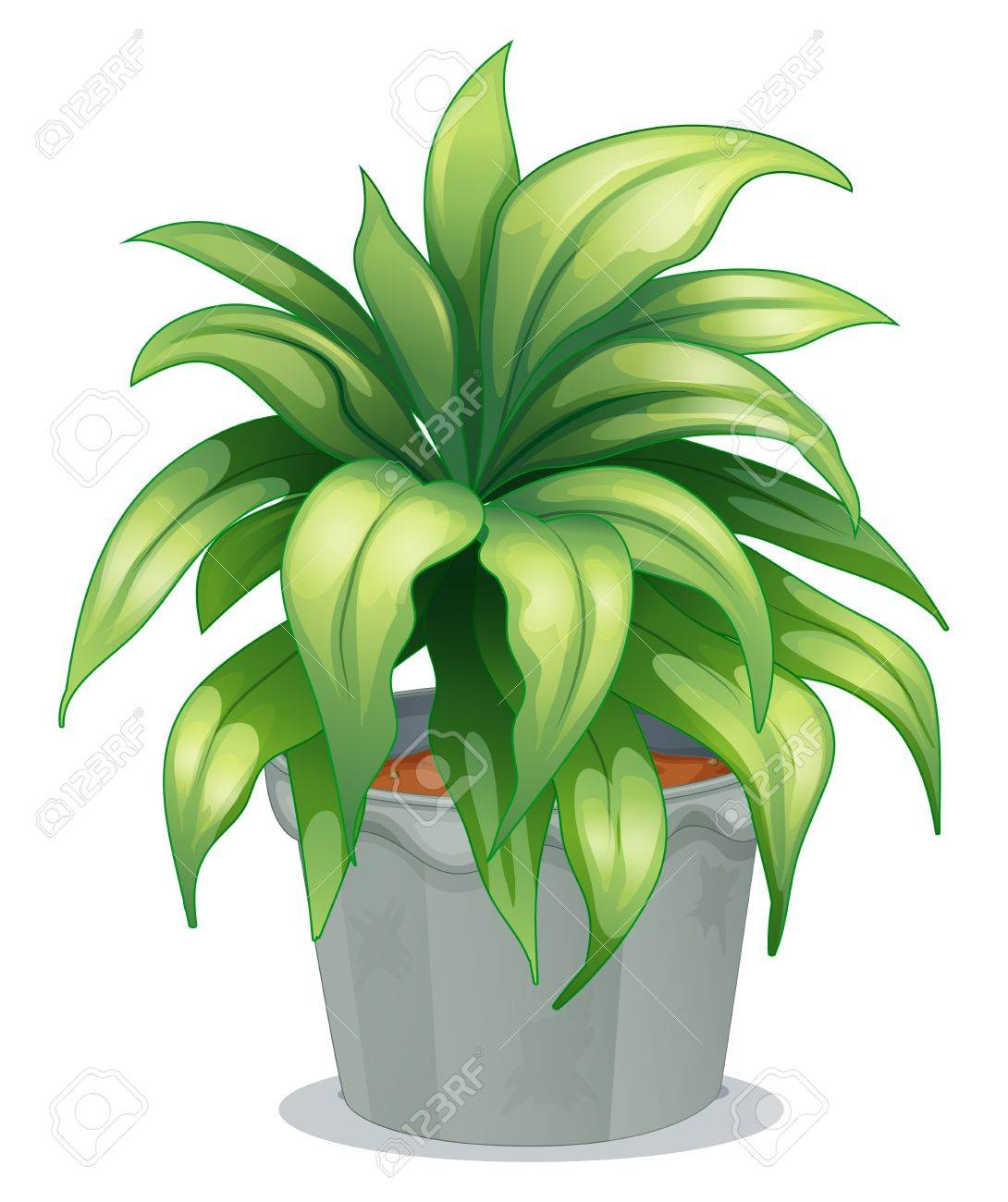Illustration of a leafy plant on a white background - 17896406