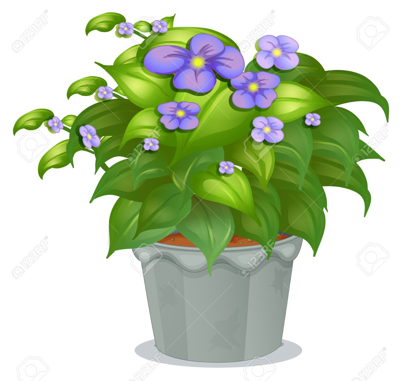 Illustration of a plant with flowers on a white background Stock Vector - 17867445