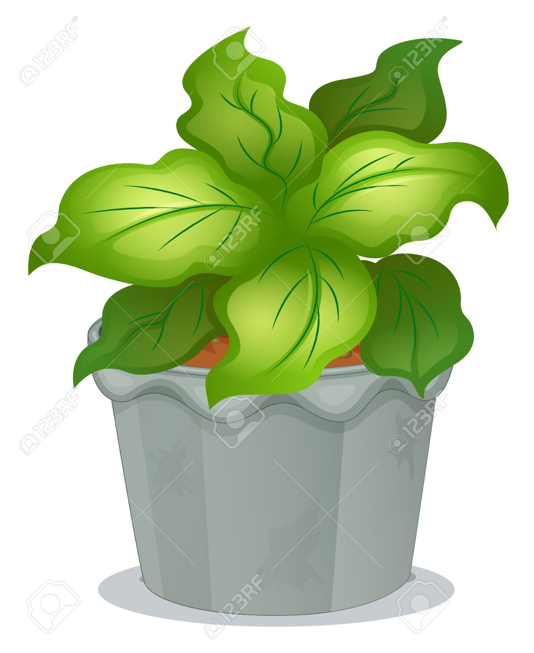 Illustration of a green ornamental plant on a white background Stock Vector - 17918393