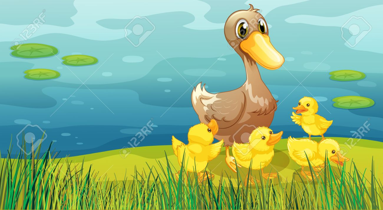 duck pond images u0026 stock pictures royalty free duck pond photos