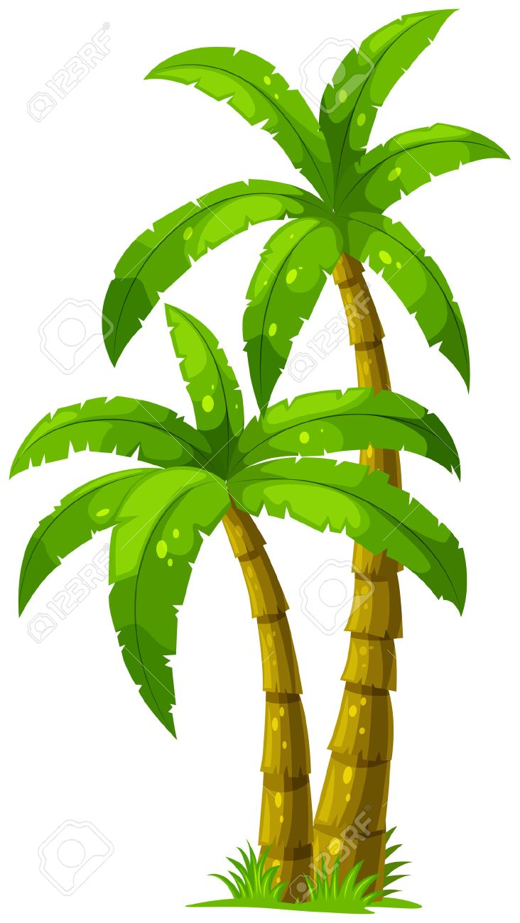 Illustration of the two palm trees on a white background Stock Vector - 23185011