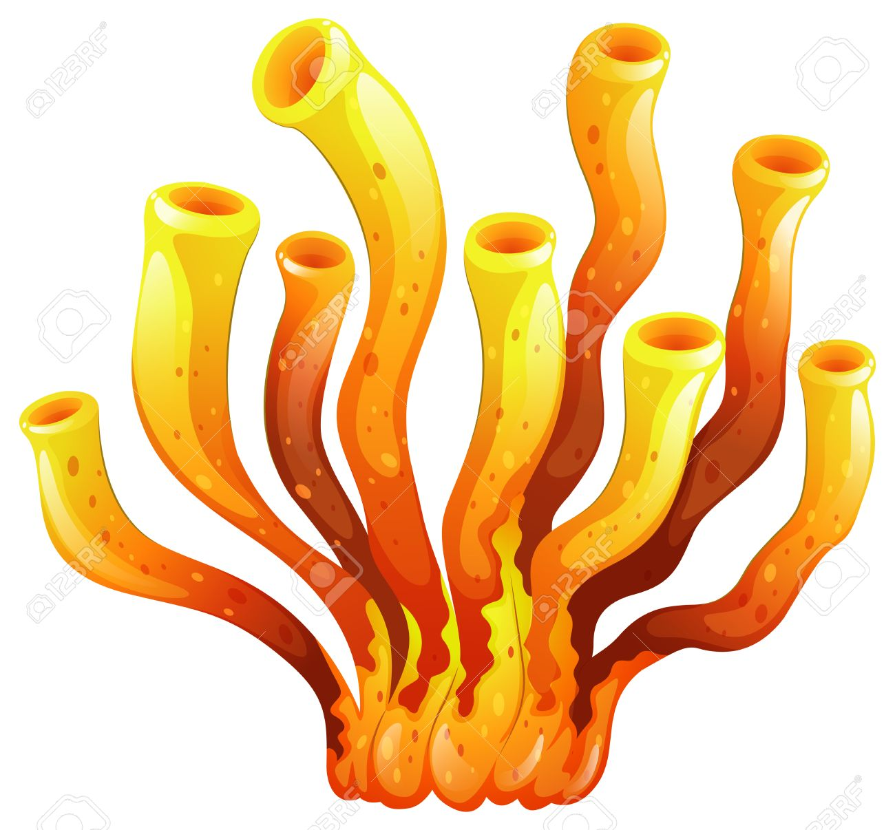 illustration of an elongated coral on a white background royalty rh 123rf com coral clipart images corel clipart free