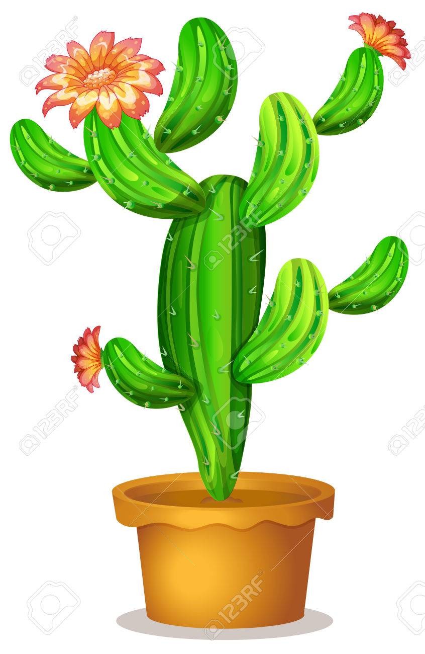 Illustration Of A Cactus Plant With Flowers On A White Background