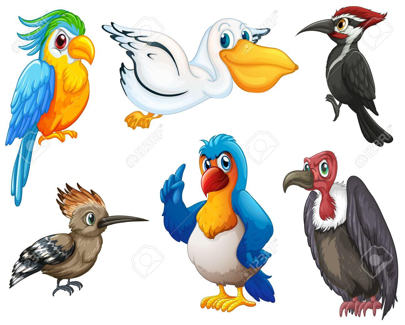 Illustration Of Different Kind Birds