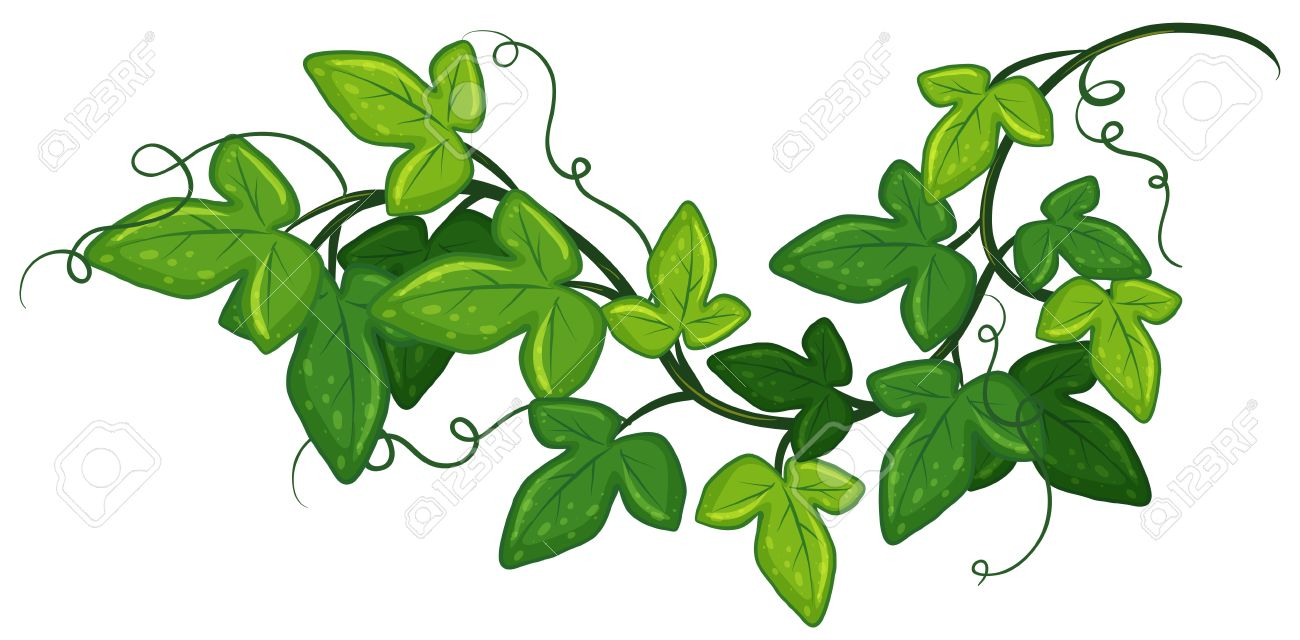 Illustration Of A Close Up Ivy Royalty Free Cliparts, Vectors, And ...
