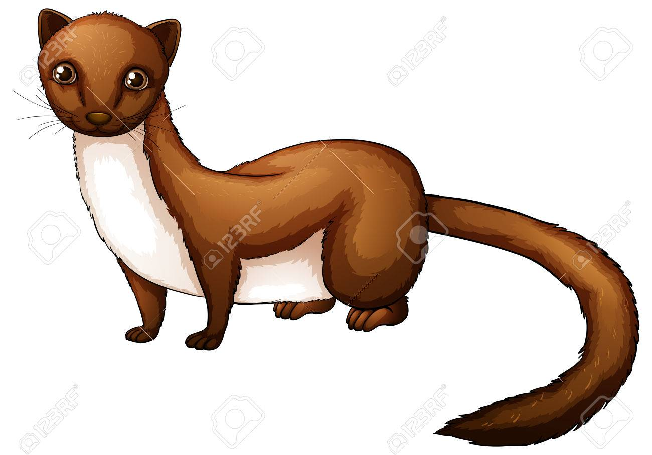 illustration of a close up weasel royalty free cliparts vectors rh 123rf com weasel clipart black and white