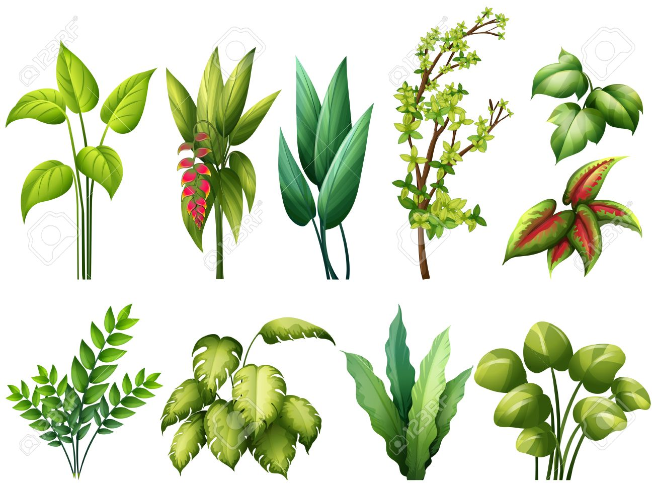 Different Kind Of Plants Royalty Free Cliparts Vectors And Stock