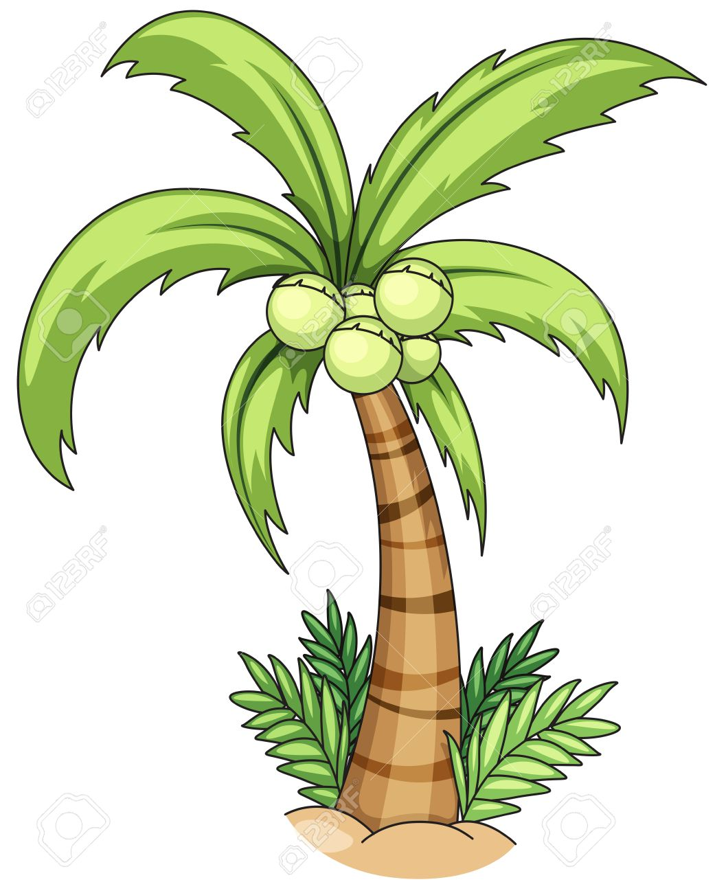 closeup single coconut tree with coconuts royalty free cliparts rh 123rf com coconut tree clipart images coconut tree clipart black and white