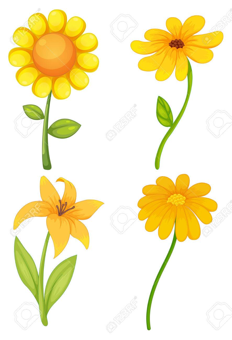 Four Different Kinds Of Yellow Flowers Royalty Free Cliparts