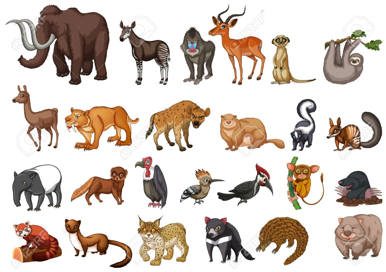 different type of wild animals on white illustration royalty free