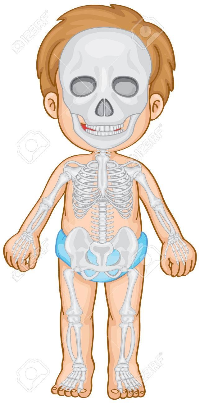 Sistema Esquelético En La Ilustración Del Niño Humano ...