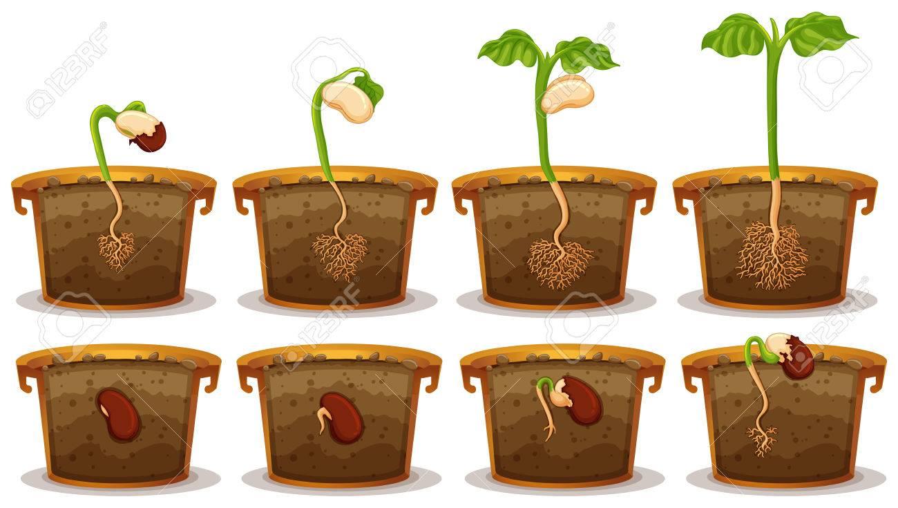 Seed germination in claypot illustration - 59314481