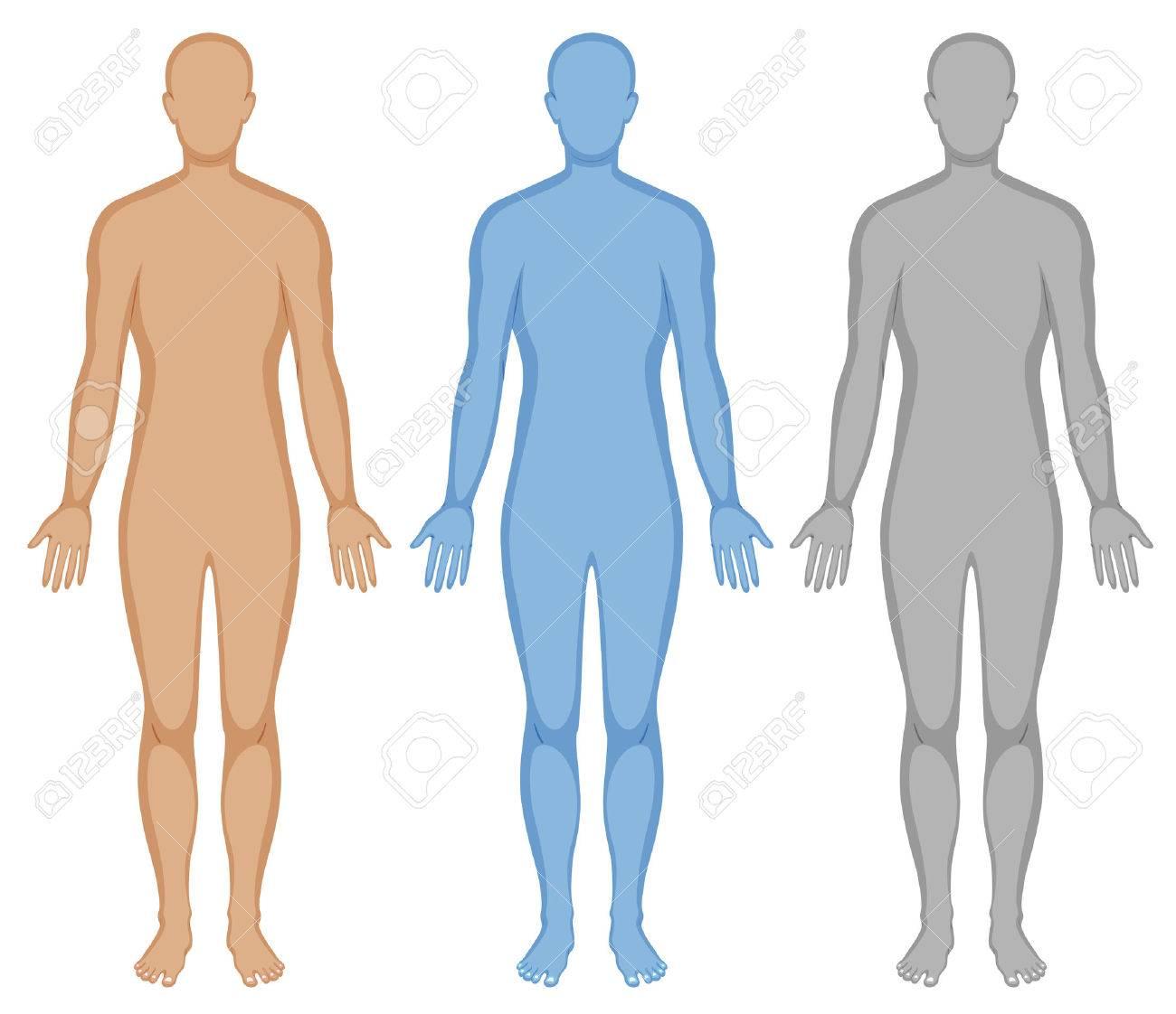 Silueta De Un Cuerpo Humano En Tres Colores Ilustración ...