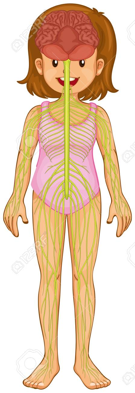 Little Girl And Nervous System Illustration Royalty Free Cliparts ...