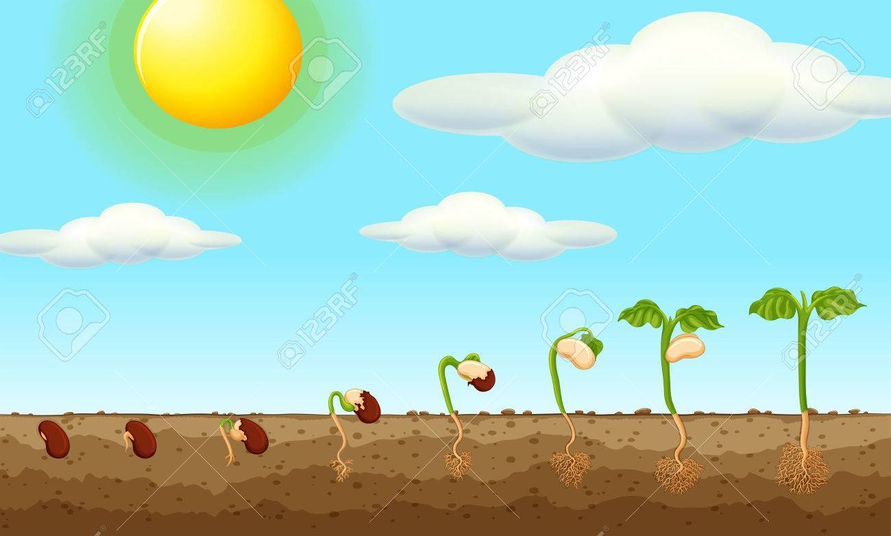 Growing plant from seed in the ground illustration - 59932728