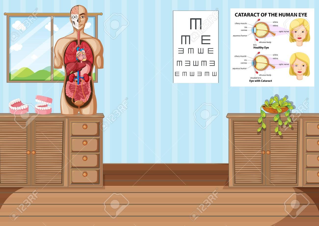 Habitación Con La Anatomía Humana Modelo De Ilustración ...