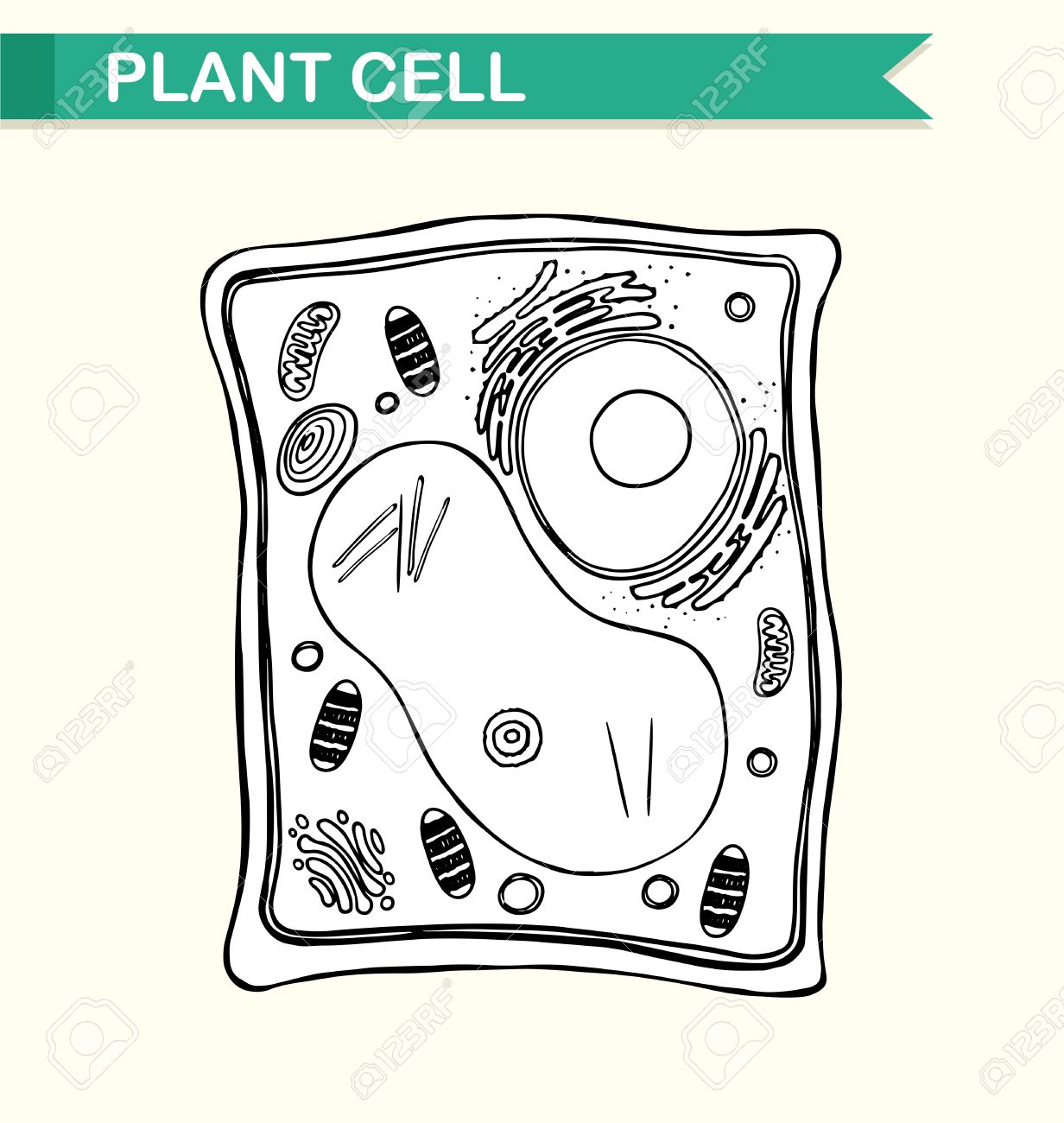 Black And White Cell Diagram Modern Design Of Wiring Prokaryotic Structure Showing Plant In Illustration Royalty Rh 123rf Com Human