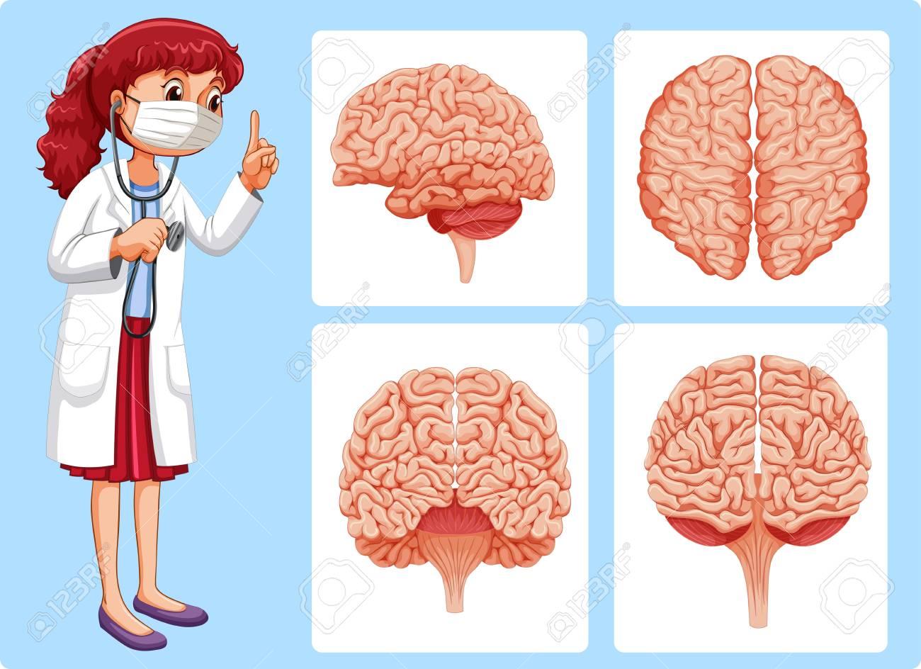 Moderno Diagramas Del Cerebro Bandera - Anatomía de Las Imágenesdel ...