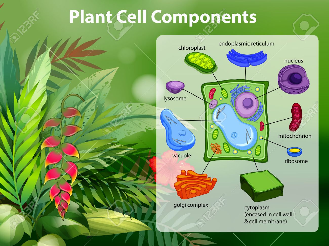 Plant cell components diagram illustration royalty free cliparts plant cell components diagram illustration stock vector 62917767 ccuart Images