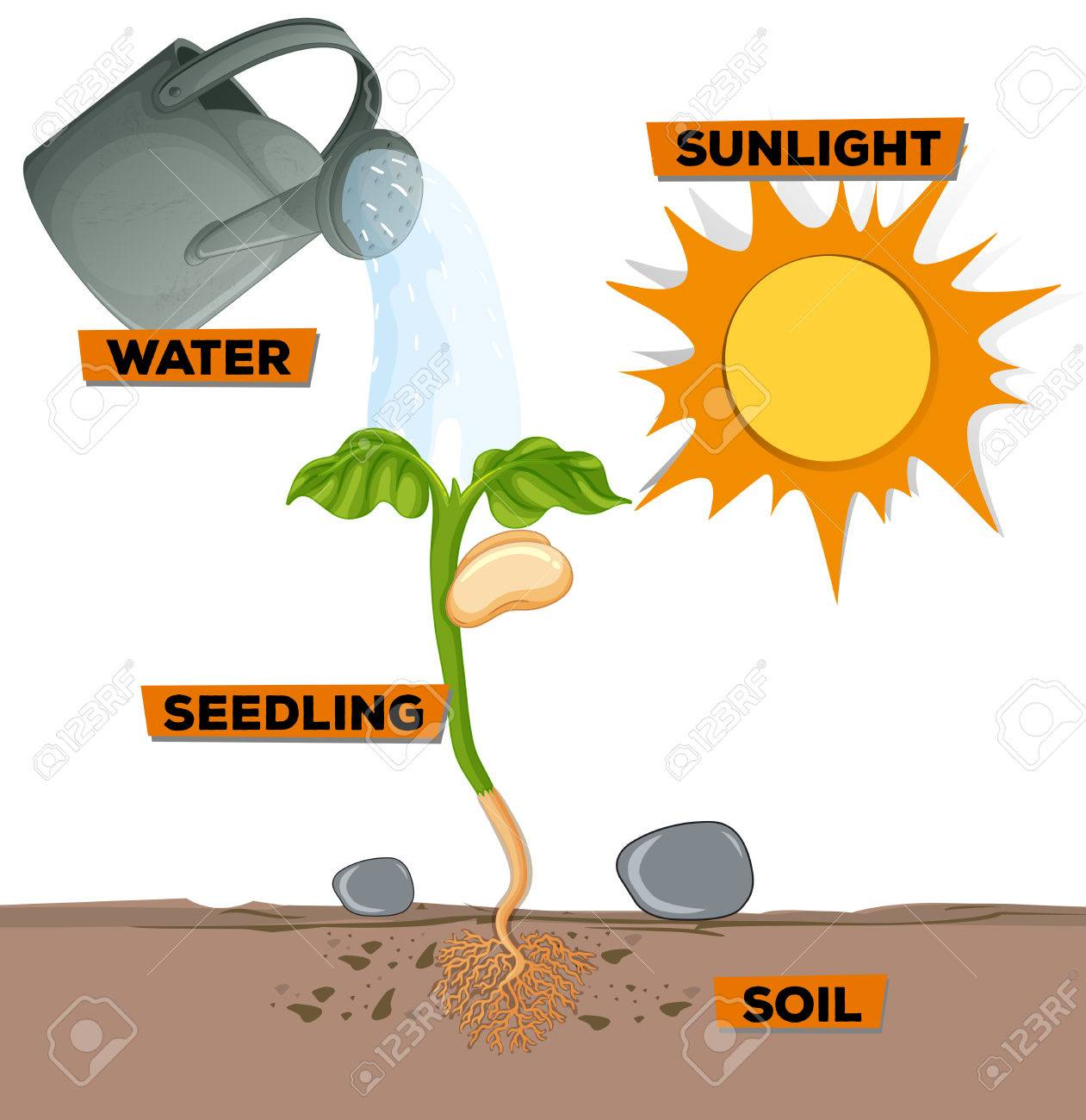 Diagram showing plant growing from water and sunlight illustration diagram showing plant growing from water and sunlight illustration imagens 67924858 ccuart Image collections