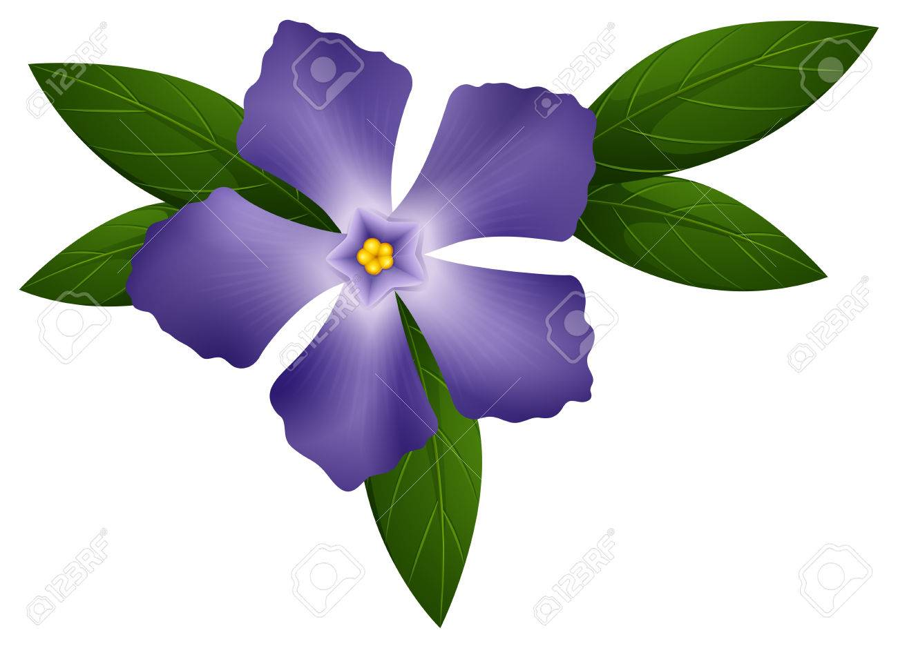 Periwinkle In Blue Color Illustration Royalty Free Cliparts Vectors