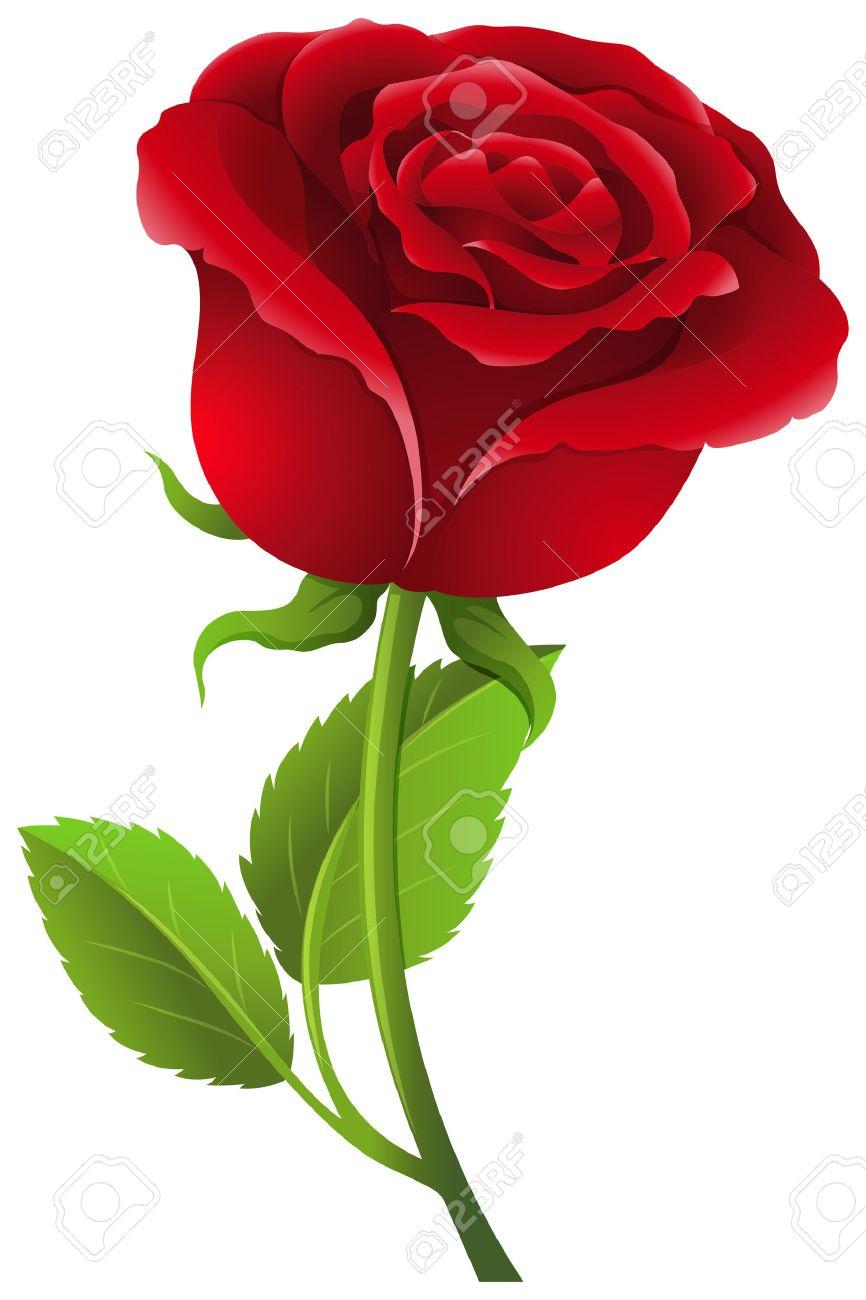 Rosa Roja Sobre El Tallo Ilustración Ilustraciones Vectoriales Clip