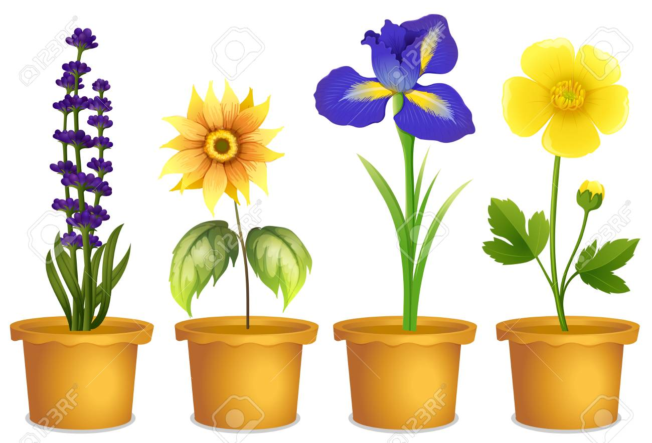 Different Types Of Flowers In Pots Illustration Royalty Free