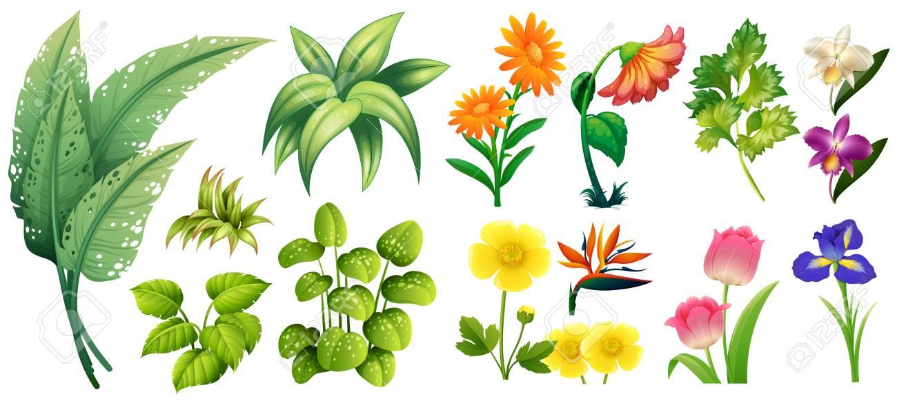 Verschiedene Arten Von Blumen Und Blätter Illustration Lizenzfrei ...