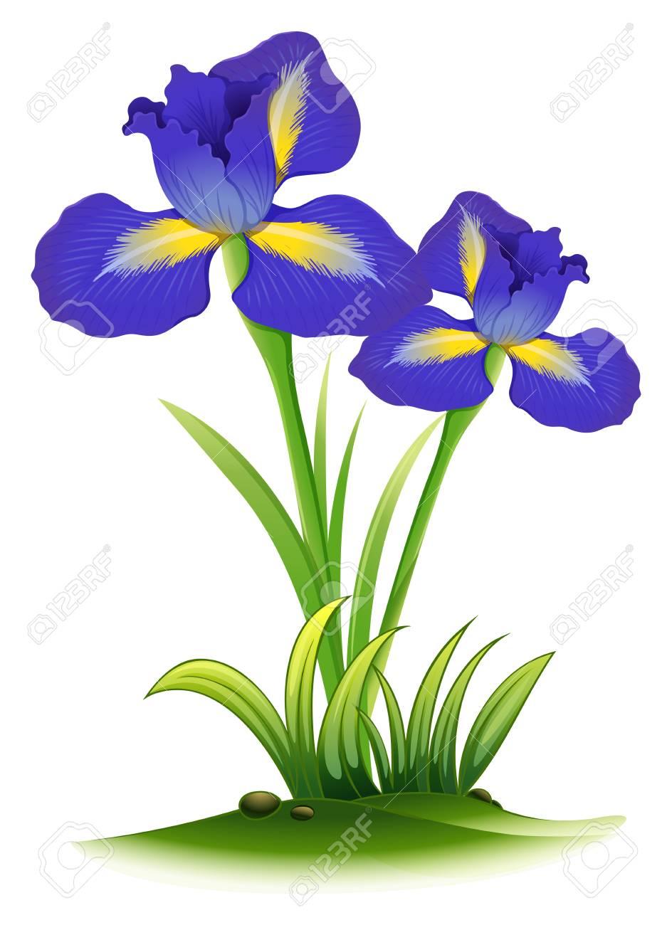 Blue Iris Flowers In Bush Illustration Royalty Free Cliparts