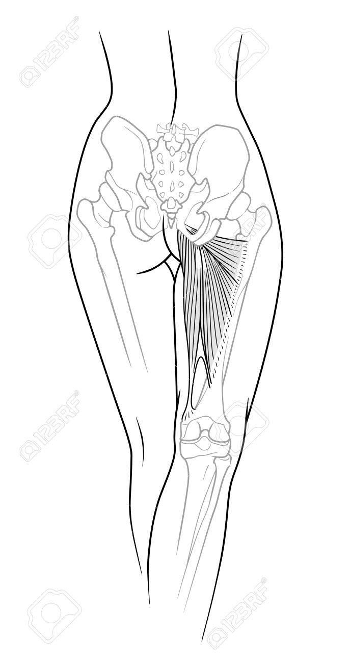 Ein Fragment Des Weiblichen Körpers, Rückseite - Der Untere Rücken ...