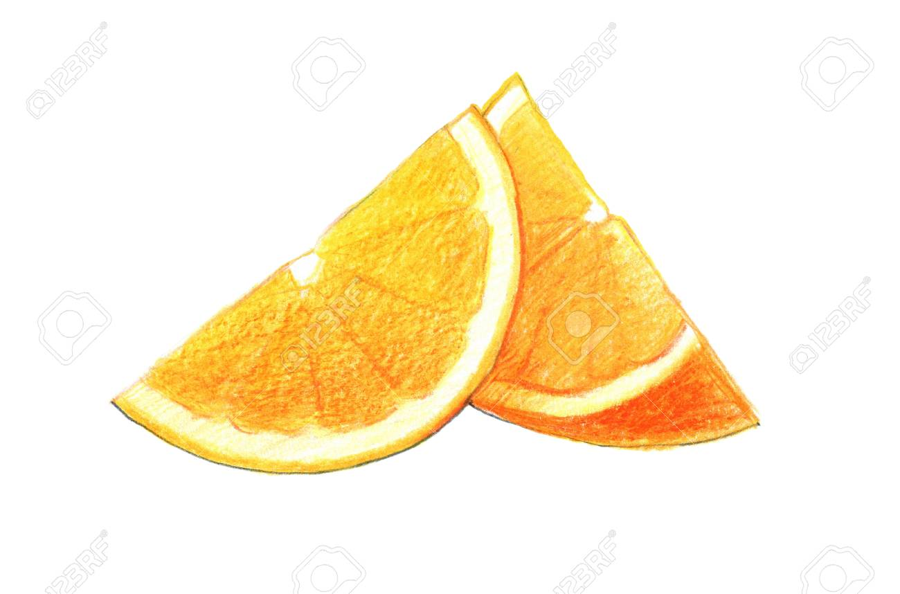 Citrus fruit orange in a cut graphic drawing with colored pencils