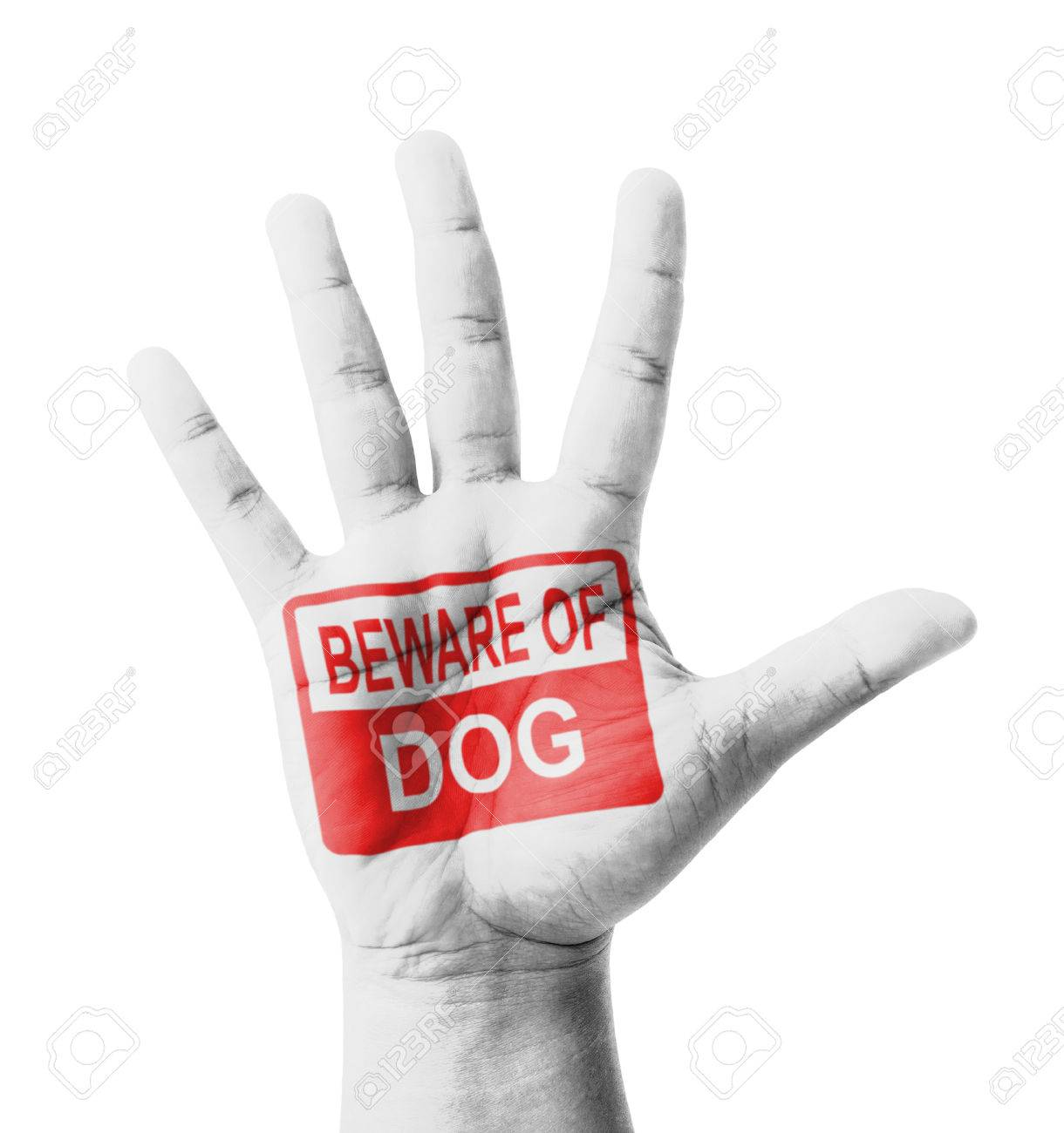 Open hand raised, Beware of Dog sign painted, multi purpose concept - isolated on white background Stock Photo - 26506052