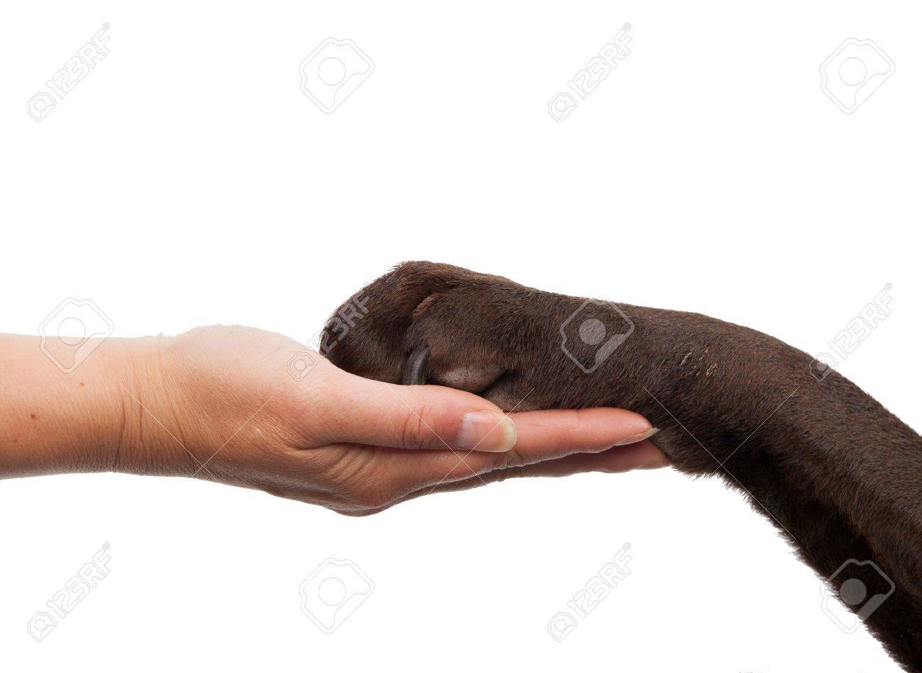 Image result for animal paw in human hand