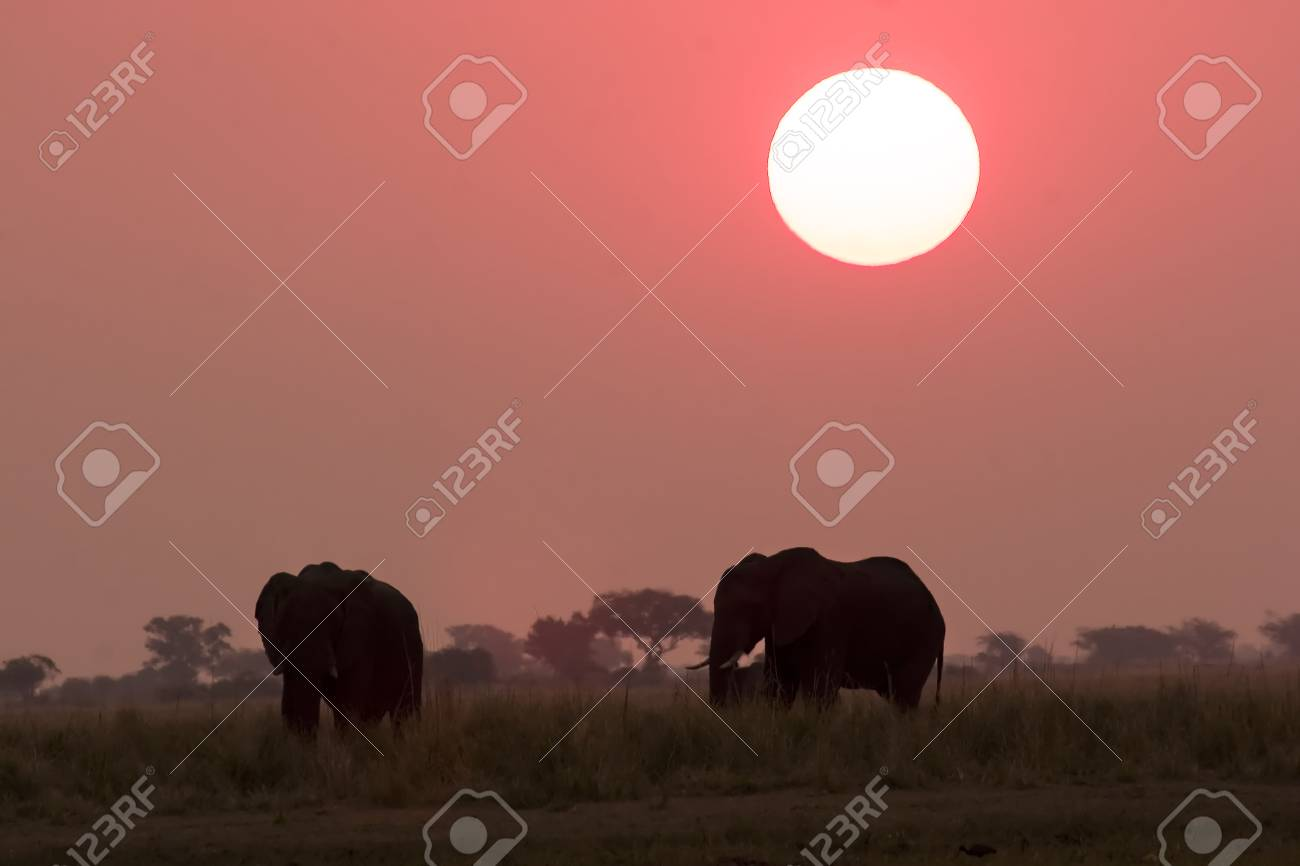 Elephant silhouettes in Chobe Game Reserve Botswana Stock Photo - 1599126