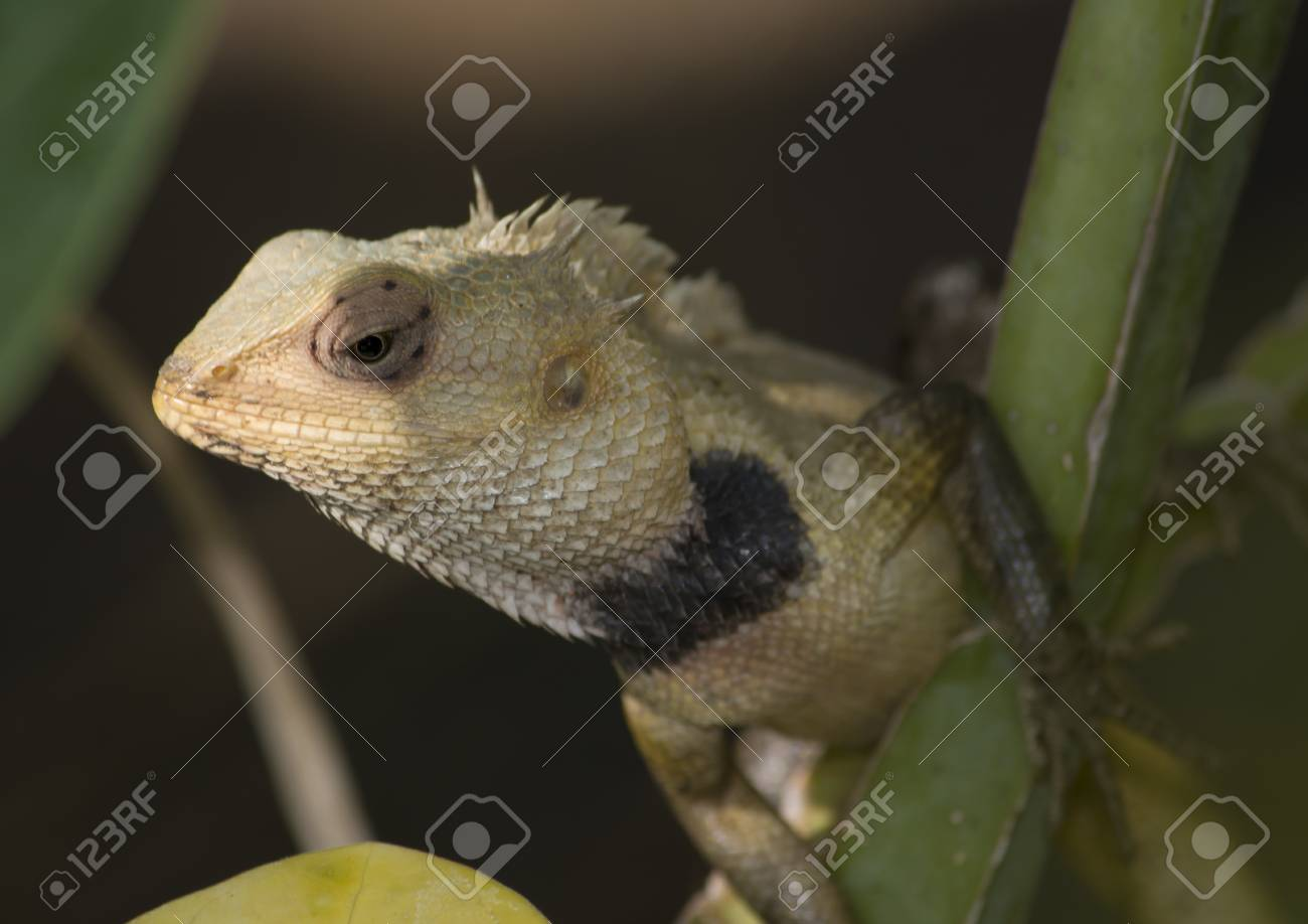 Garden Lizard Between Green Leaves With Brown Background Stock Photo ...