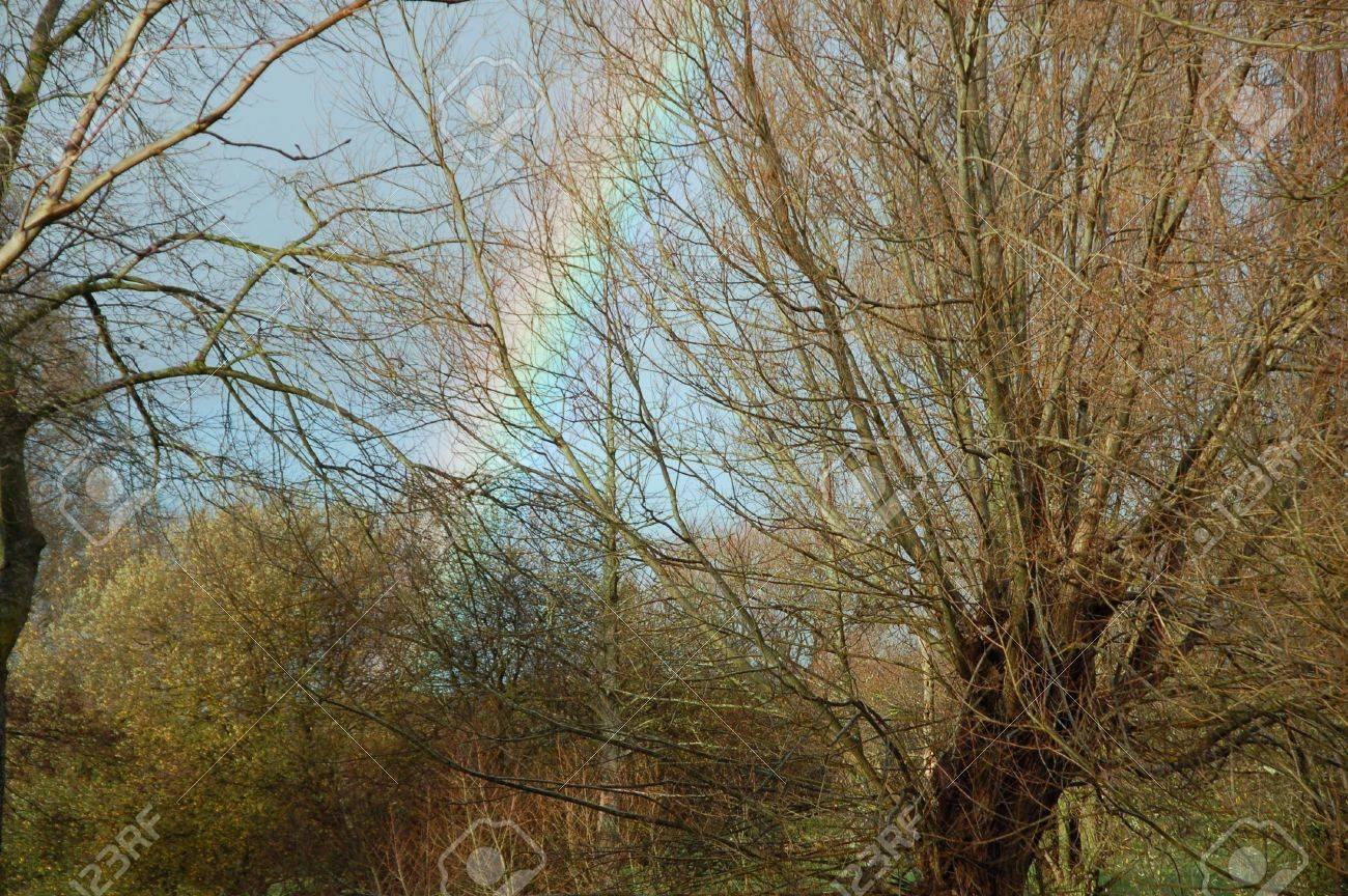 Rainbow In The Trees Stock Photo - 649408